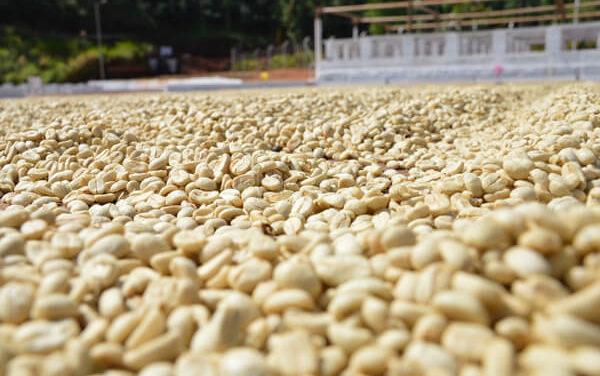 Tỷ giá, hạn hán gây bất lợi cho xuất khẩu nông sản